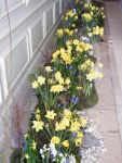 Flowers 087