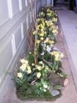 Flowers 089